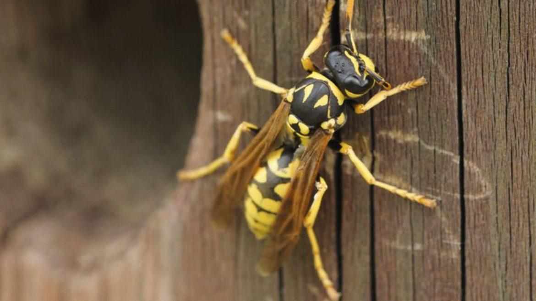 piqure-abeille
